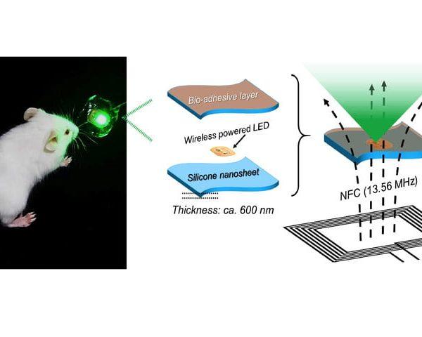LED per la cura dei tumori 1